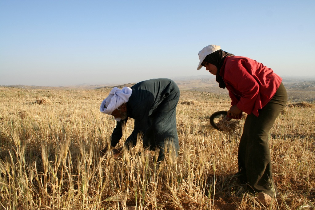 farming palestine for freedom